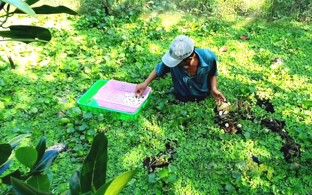Tiền Giang: Độc đáo nuôi loài đặc sản sống hoang dã lấy trứng bán, anh nông dân thu tiền triệu mỗi ngày - Ảnh 2.