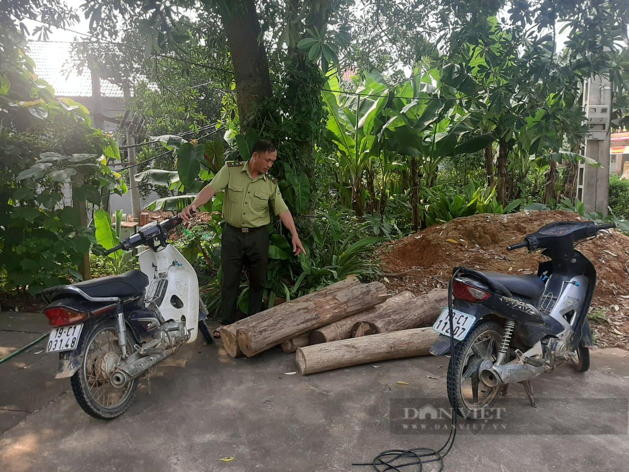 """Phú Thọ: Tái diễn nạn phá rừng trong mùa dịch Covid, kiểm lâm """"căng mình"""" xử lý - Ảnh 2."""