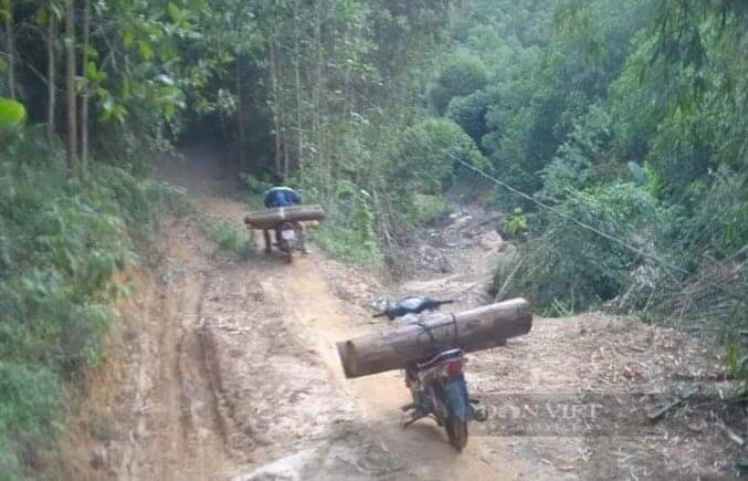"""Phú Thọ: Tái diễn nạn phá rừng trong mùa dịch Covid, kiểm lâm """"căng mình"""" xử lý - Ảnh 3."""
