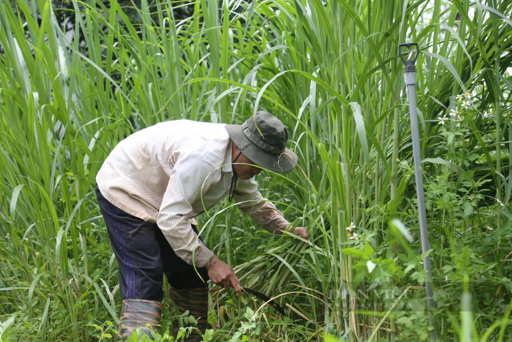 Đắk Lắk: Bỏ phố về quê nuôi con tai dài lấy sữa, thu gần 1 tỷ đồng/năm - Ảnh 3.