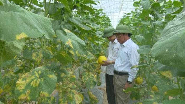 Đưa huyện Triệu Sơn đạt chuẩn nông thôn mới ngay trong năm 2021 - Ảnh 5.