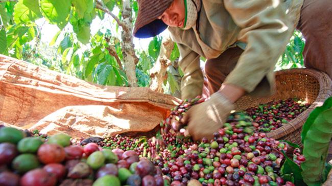 Xuất khẩu cà phê của Việt Nam dự báo sẽ tăng mạnh, nhất là ở thị trường này - Ảnh 2.