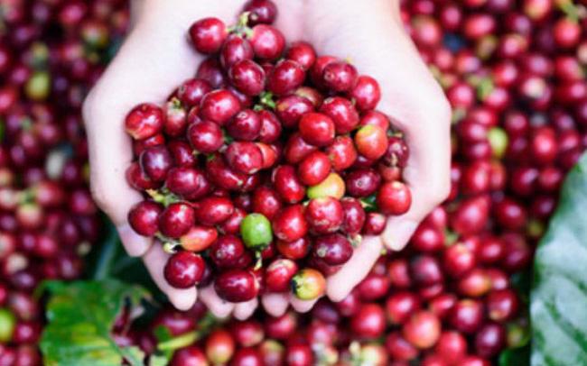 Xuất khẩu cà phê của Việt Nam dự báo sẽ tăng mạnh, nhất là ở thị trường này - Ảnh 1.