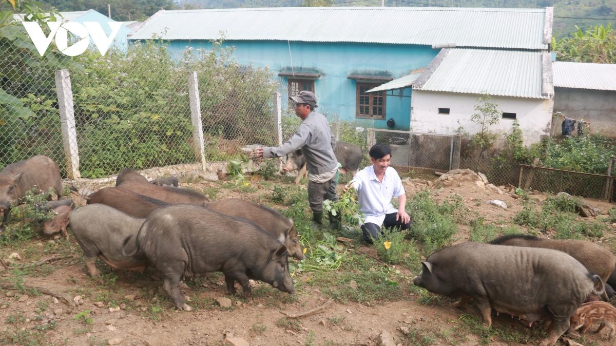 Thanh niên Quảng Nam làm giàu từ vùng đất hoang sơ, cây cối mọc um tùm - Ảnh 2.