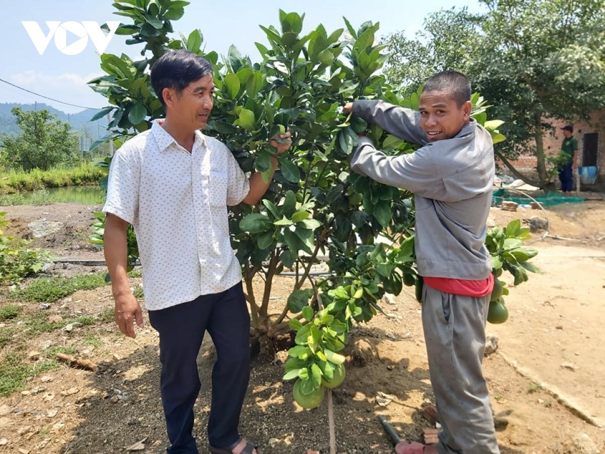 Thanh niên Quảng Nam làm giàu từ vùng đất hoang sơ, cây cối mọc um tùm - Ảnh 3.