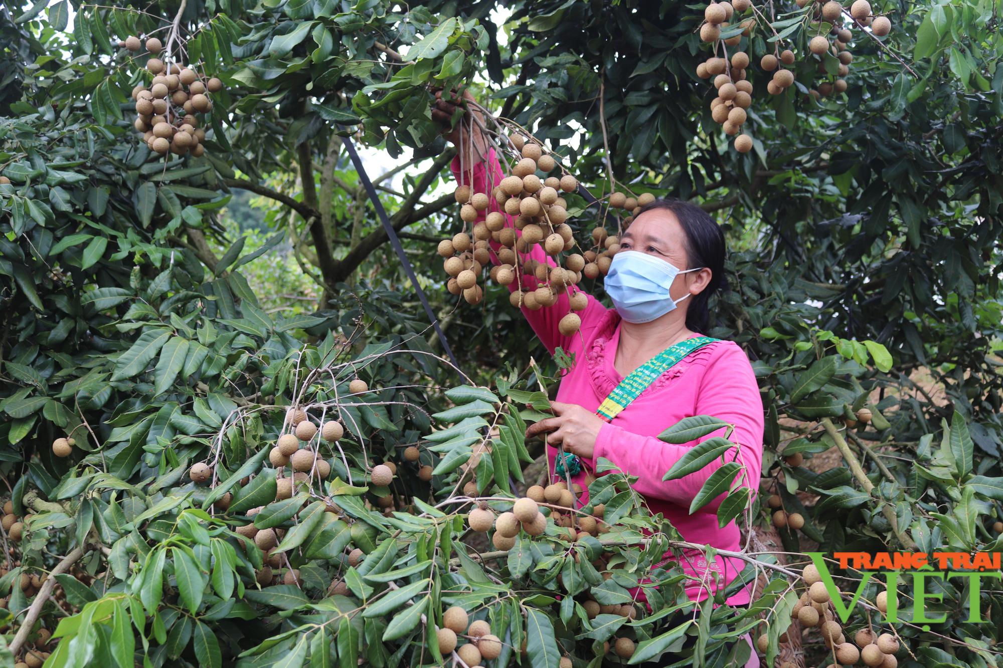 Thu trăm triệu mỗi năm nhờ trồng cây ăn quả kết hợp chăn nuôi - Ảnh 1.