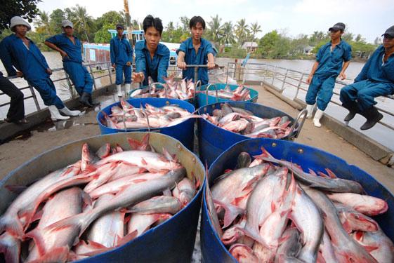 10 doanh nghiệp xuất khẩu cá tra, basa của Việt Nam không bị Mỹ áp thuế chống bán phá giá - Ảnh 1.