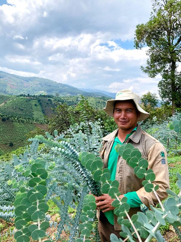 Lâm Đồng: Trồng cây lạ có tên cây đô-la, anh nông dân giỏi chỉ bán cành cũng thu trăm triệu/năm - Ảnh 1.