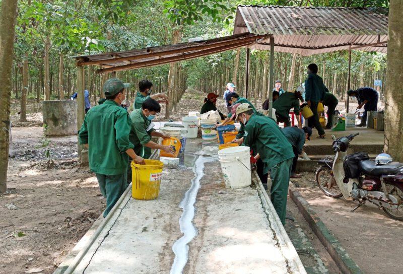 Mỗi tháng Trung Quốc cần mua 500.000 tấn nông sản này, Việt Nam bán được bao nhiêu tấn? - Ảnh 1.