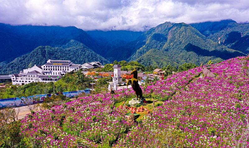 Tháng 9, Sa Pa đẹp nao lòng, ruộng bậc thang chuyển màu kỳ diệu, những triền hoa rực rỡ sắc màu - Ảnh 4.