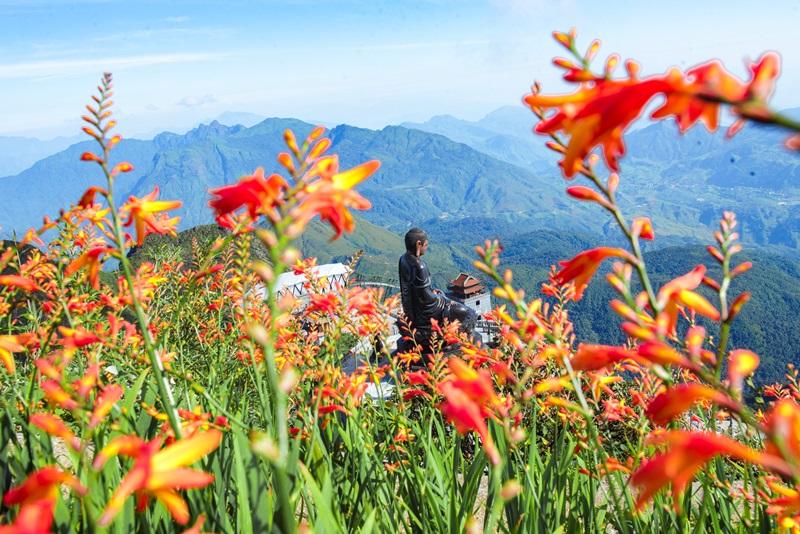 Tháng 9, Sa Pa đẹp nao lòng, ruộng bậc thang chuyển màu kỳ diệu, những triền hoa rực rỡ sắc màu - Ảnh 8.
