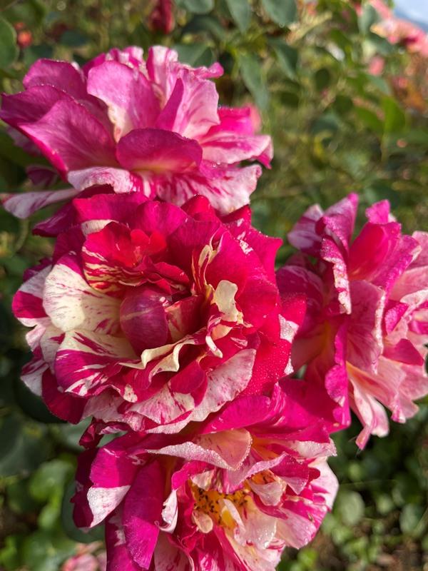 Tháng 9, Sa Pa đẹp nao lòng, ruộng bậc thang chuyển màu kỳ diệu, những triền hoa rực rỡ sắc màu - Ảnh 5.