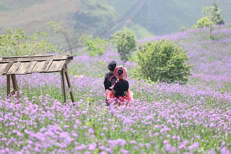 Tháng 9, Sa Pa đẹp nao lòng, ruộng bậc thang chuyển màu kỳ diệu, những triền hoa rực rỡ sắc màu - Ảnh 2.