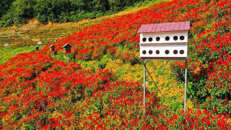 Tháng 9, Sa Pa đẹp nao lòng, ruộng bậc thang chuyển màu kỳ diệu, những triền hoa rực rỡ sắc màu - Ảnh 7.