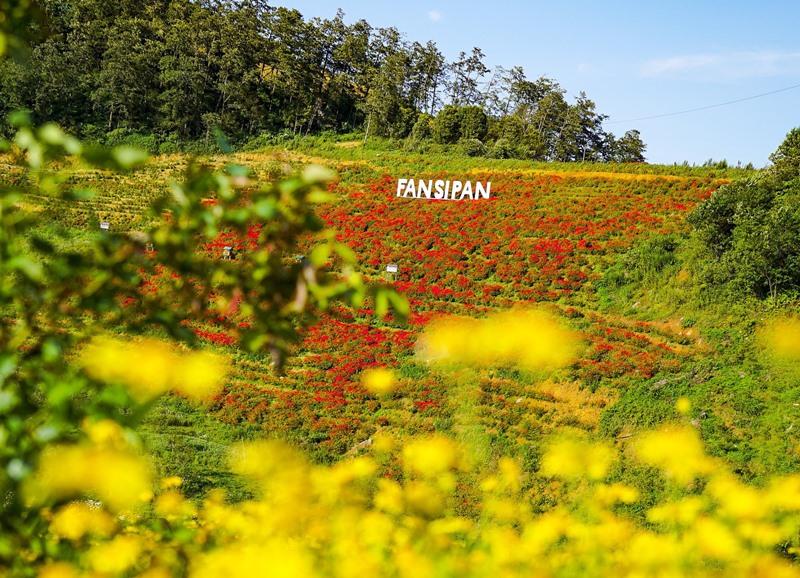 Tháng 9, Sa Pa đẹp nao lòng, ruộng bậc thang chuyển màu kỳ diệu, những triền hoa rực rỡ sắc màu - Ảnh 3.