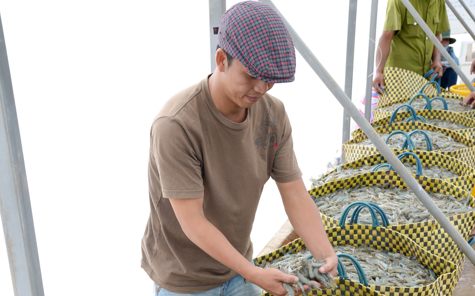 Mỹ, Nhật Bản đặc biệt ưa chuộng một loại thủy sản của Việt Nam, có bao nhiêu cũng mua hết