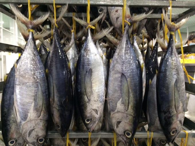 Cá ngừ Việt Nam chiếm thị phần lớn nhất ở Israel - Ảnh 1.