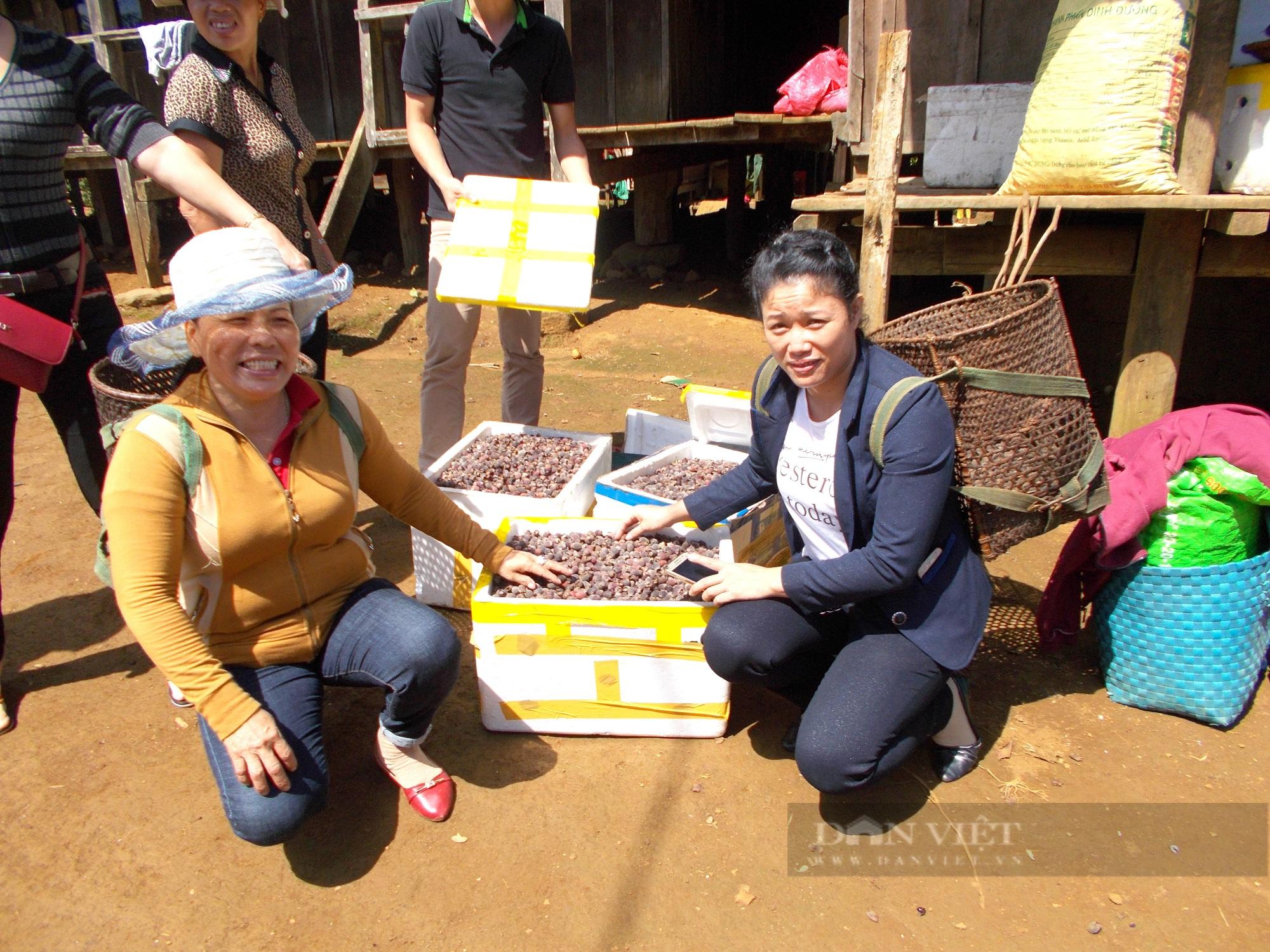 """Bình Định: Một huyện có hơn 500 héc ta rừng tự nhiên ra quả """"tím lịm"""", giúp dân hái ra tiền  - Ảnh 4."""
