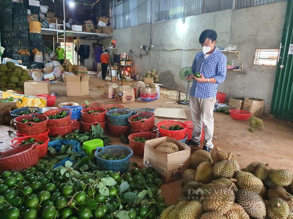 Đắk Lắk: Huyện Krông Búk cho phép thu mua nông sản trở lại vào ngày mai - Ảnh 3.