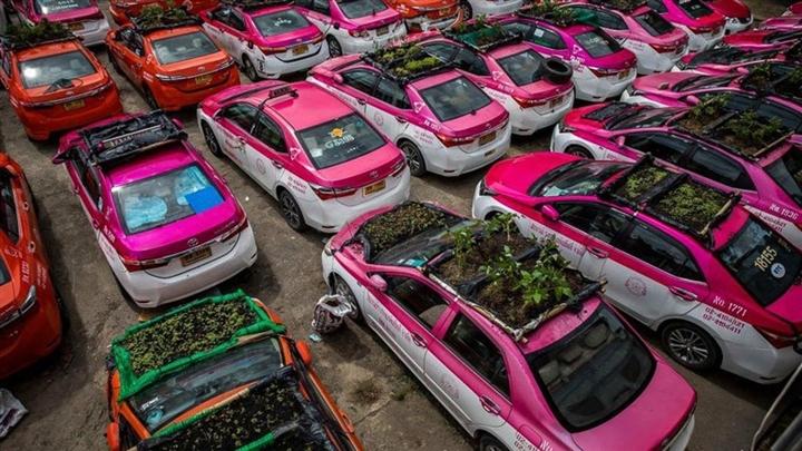 Thái Lan: Ế ẩm vì COVID-19, hàng trăm taxi biến thành nơi trồng rau - Ảnh 1.
