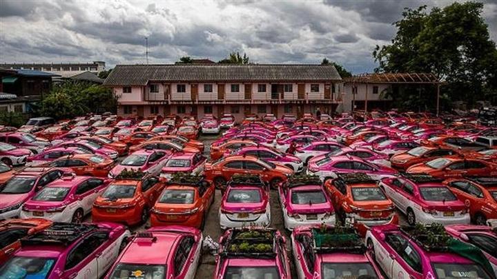 Thái Lan: Ế ẩm vì COVID-19, hàng trăm taxi biến thành nơi trồng rau - Ảnh 2.