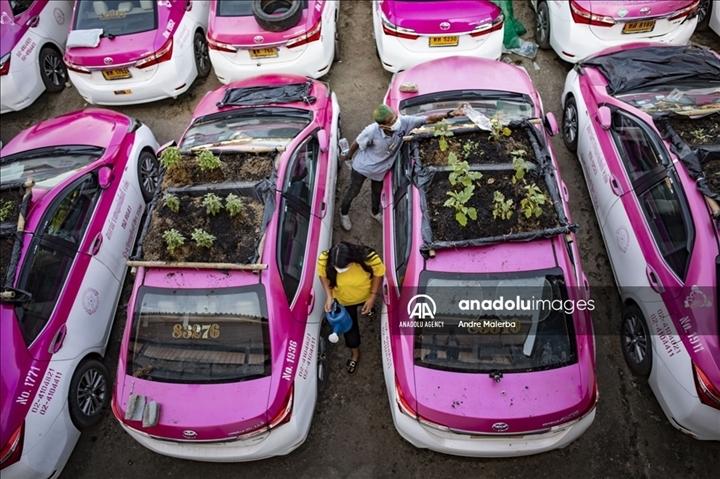 Thái Lan: Ế ẩm vì COVID-19, hàng trăm taxi biến thành nơi trồng rau - Ảnh 3.