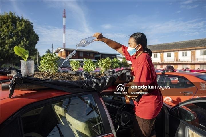 Thái Lan: Ế ẩm vì COVID-19, hàng trăm taxi biến thành nơi trồng rau - Ảnh 5.