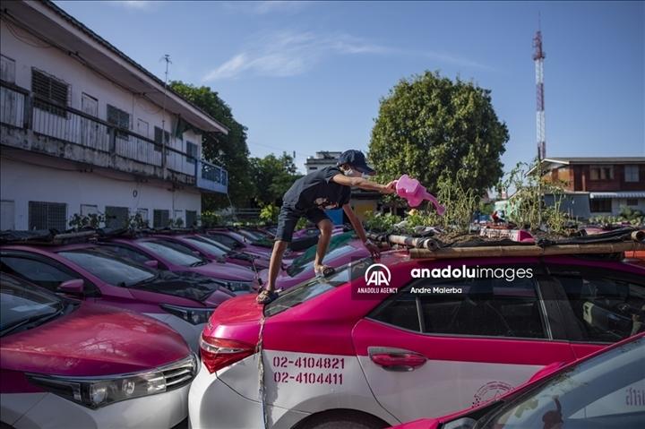 Thái Lan: Ế ẩm vì COVID-19, hàng trăm taxi biến thành nơi trồng rau - Ảnh 6.