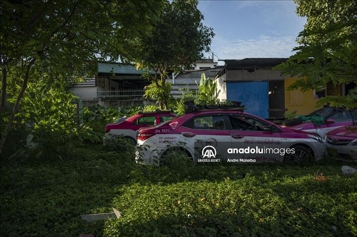Thái Lan: Ế ẩm vì COVID-19, hàng trăm taxi biến thành nơi trồng rau - Ảnh 7.