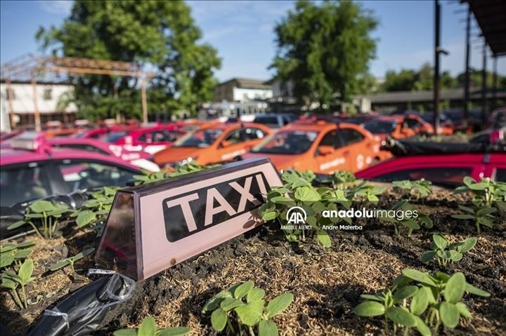 Thái Lan: Ế ẩm vì COVID-19, hàng trăm taxi biến thành nơi trồng rau - Ảnh 8.