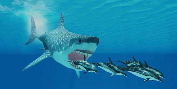 Các nhà khoa học tiết lộ về những sinh vật khổng lồ nằm sâu dưới đáy đại dương - Ảnh 4.