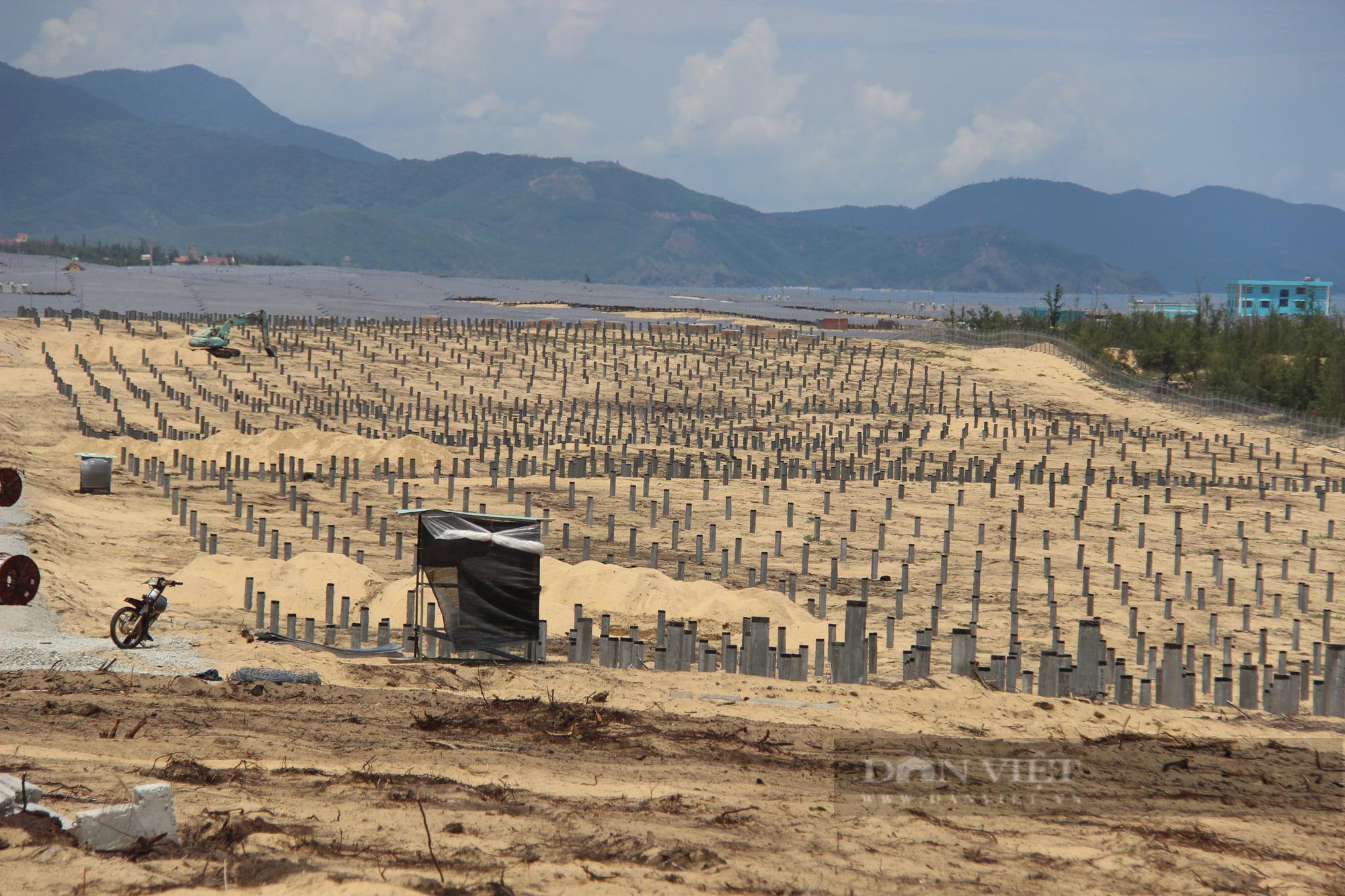 """Dự án Nhà máy điện mặt trời """"tàn sát"""" 5,2ha rừng do nhầm lẫn: Bất ngờ báo cáo của UBND huyện Phù Mỹ gửi tỉnh! - Ảnh 4."""