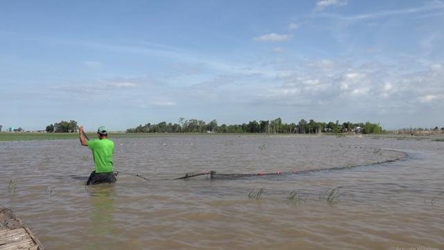 Đồng Tháp: Nước đã tràn đồng ở thượng nguồn, dân hối hả thả lưới, giăng câu bắt cá tôm trên đồng - Ảnh 1.