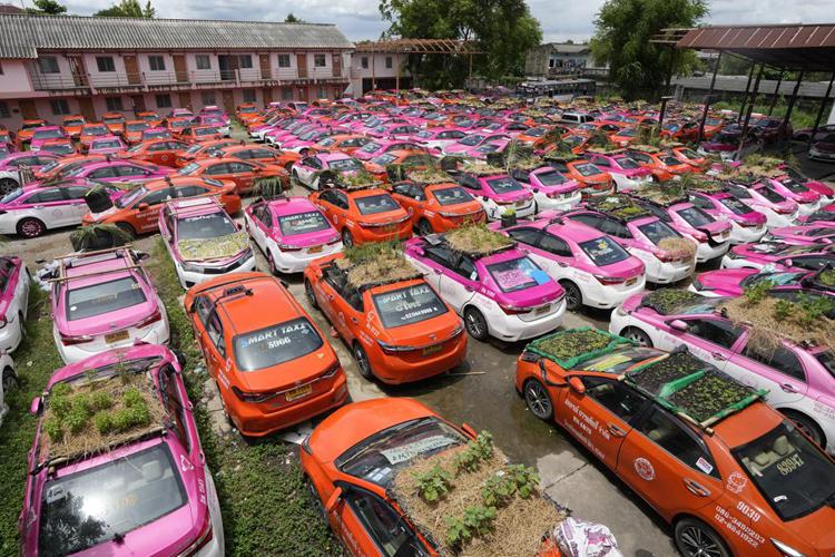 """Biến """"nghĩa địa"""" taxi thành vườn rau độc đáo ở Thái Lan - Ảnh 1."""