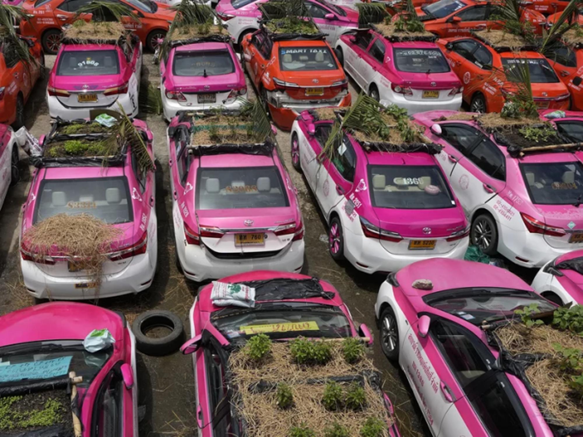 """Biến """"nghĩa địa"""" taxi thành vườn rau độc đáo ở Thái Lan - Ảnh 10."""