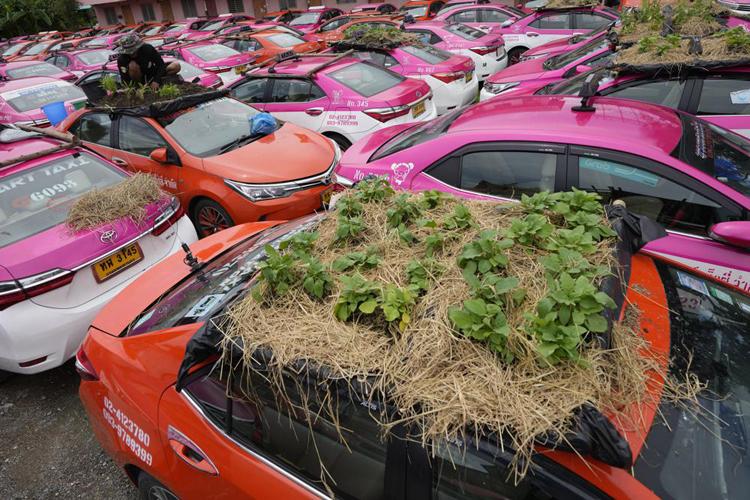 """Biến """"nghĩa địa"""" taxi thành vườn rau độc đáo ở Thái Lan - Ảnh 2."""
