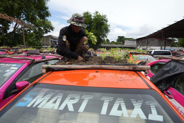 """Biến """"nghĩa địa"""" taxi thành vườn rau độc đáo ở Thái Lan - Ảnh 4."""