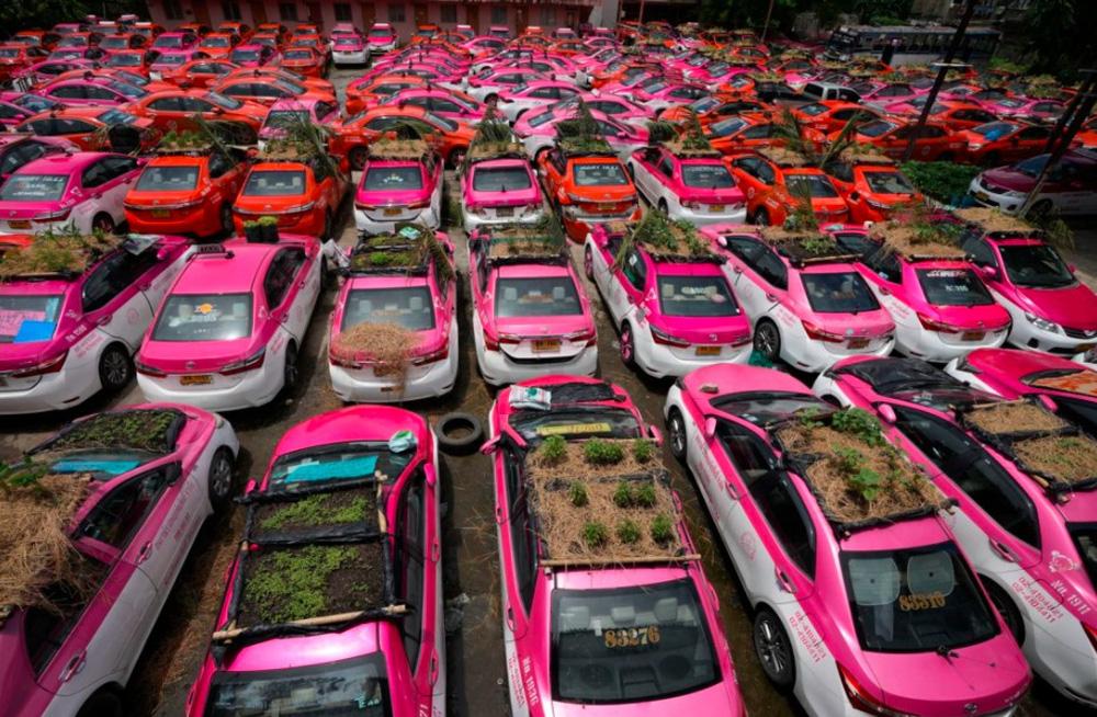 """Biến """"nghĩa địa"""" taxi thành vườn rau độc đáo ở Thái Lan - Ảnh 5."""
