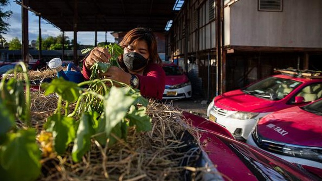 """Biến """"nghĩa địa"""" taxi thành vườn rau độc đáo ở Thái Lan - Ảnh 6."""
