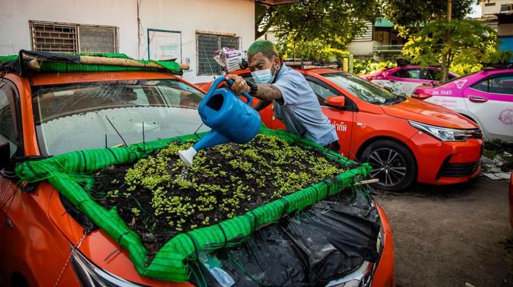 """Biến """"nghĩa địa"""" taxi thành vườn rau độc đáo ở Thái Lan - Ảnh 7."""