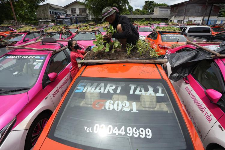 """Biến """"nghĩa địa"""" taxi thành vườn rau độc đáo ở Thái Lan - Ảnh 8."""