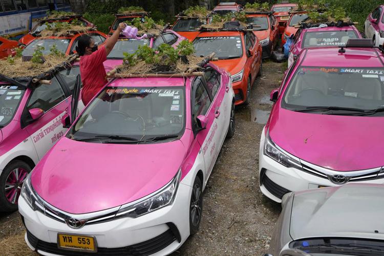 """Biến """"nghĩa địa"""" taxi thành vườn rau độc đáo ở Thái Lan - Ảnh 9."""
