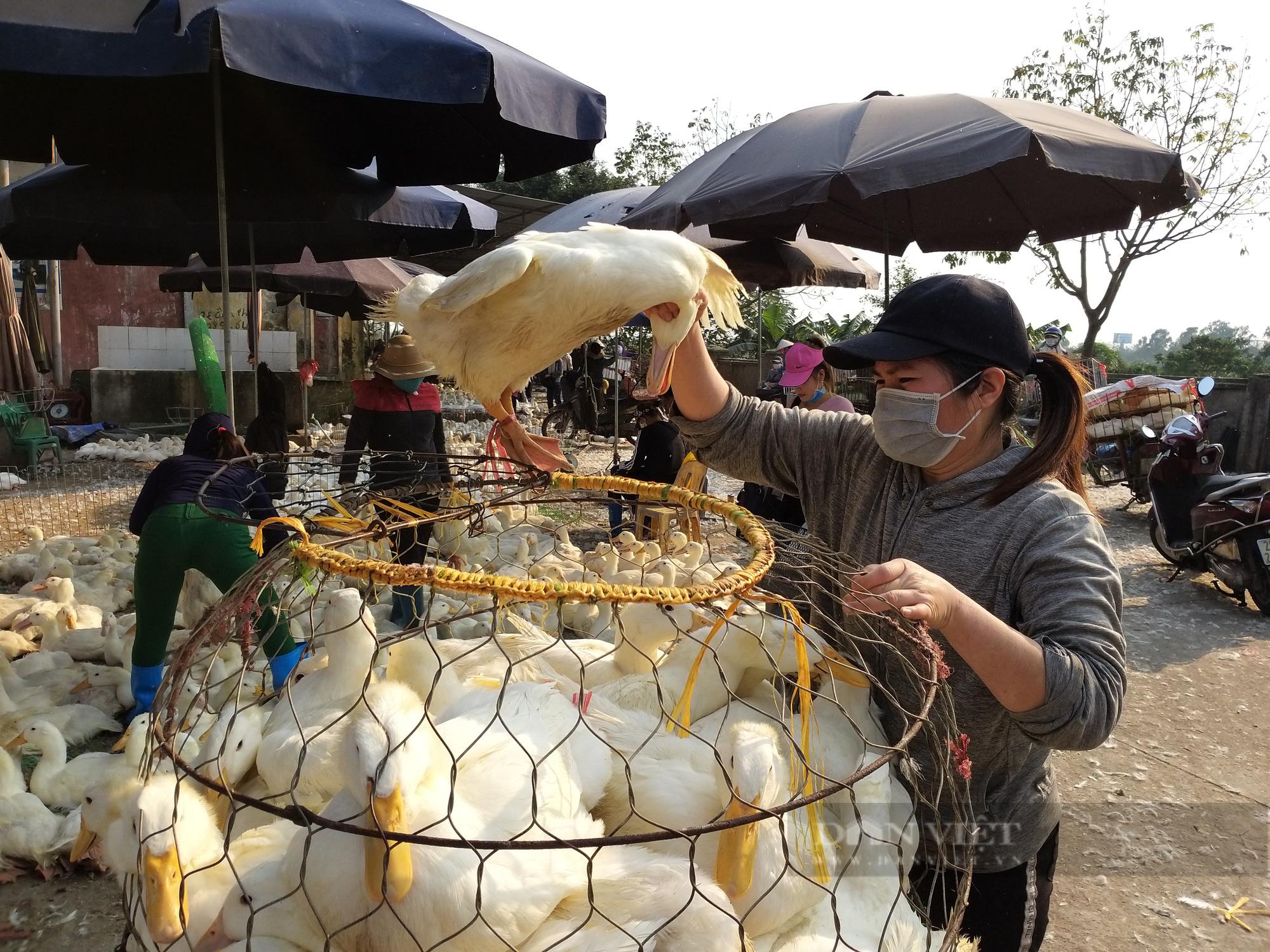 Giá gia cầm hôm nay 18/9: Cập nhật giá gà, vịt mới nhất tại ba miền, giá gà trắng đi ngang - Ảnh 1.