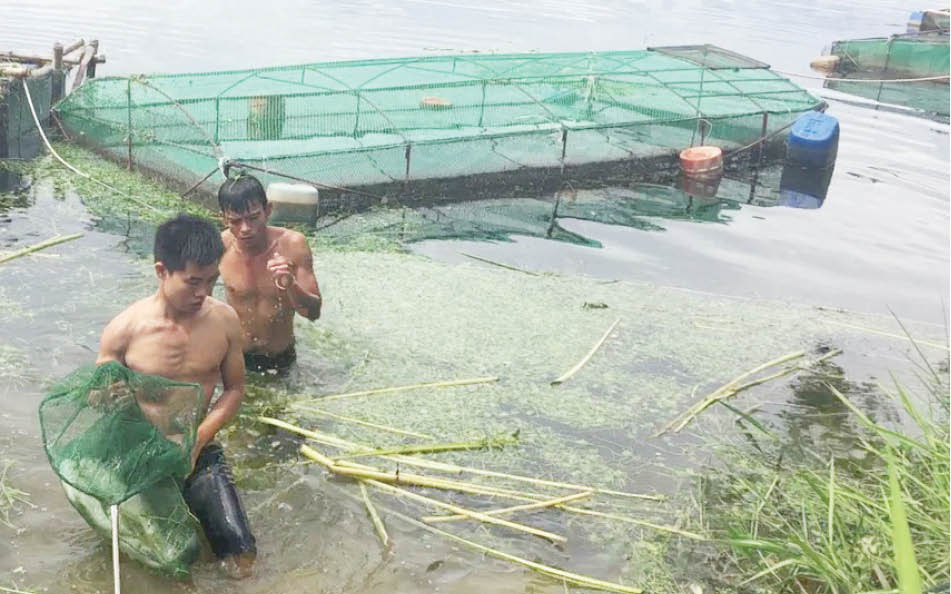 """TT-Huế: Vì sao nông dân """"ghim hàng"""" thủy sản, ngành chức năng khuyến cáo điều gì?"""