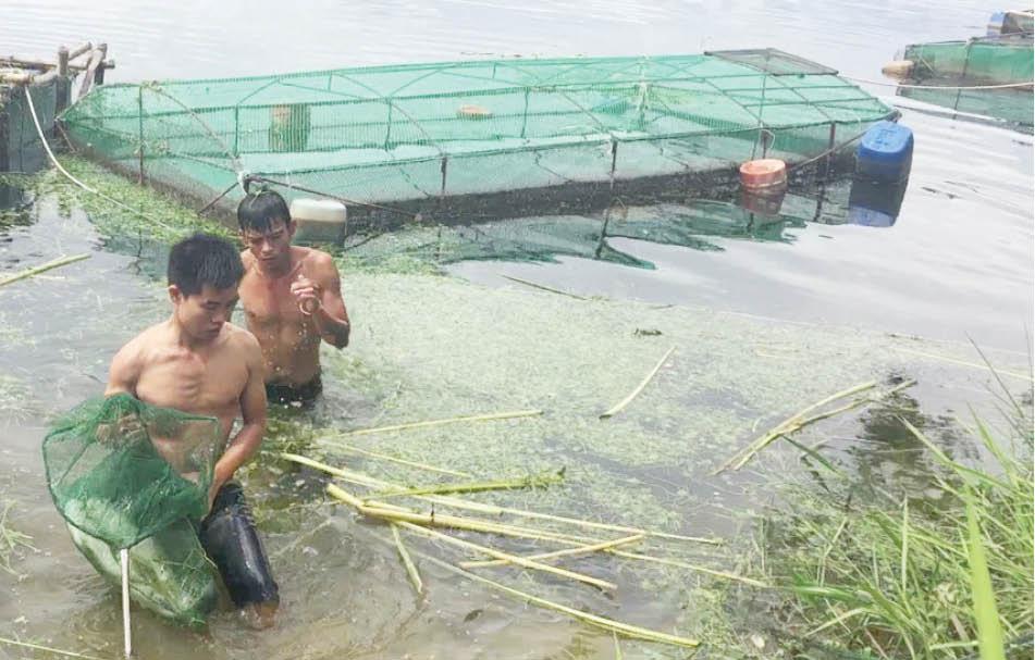 """TT-Huế: Vì sao nông dân """"ghim hàng"""" thủy sản, ngành chức năng khuyến cáo điều gì? - Ảnh 1."""