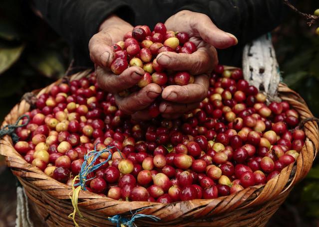 Giá nông sản hôm nay 18/9: Giá tiêu cao nhất 80.500 đồng/kg, cà phê tăng thêm 600 đồng/kg - Ảnh 2.