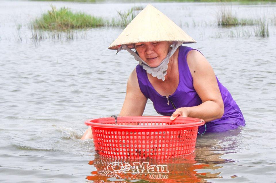 Cà Mau: Con vọp là con gì mà dân thả nuôi trong vuông cùng với tôm sú, cua biển, bắt bán 60.000 đồng/kg? - Ảnh 1.