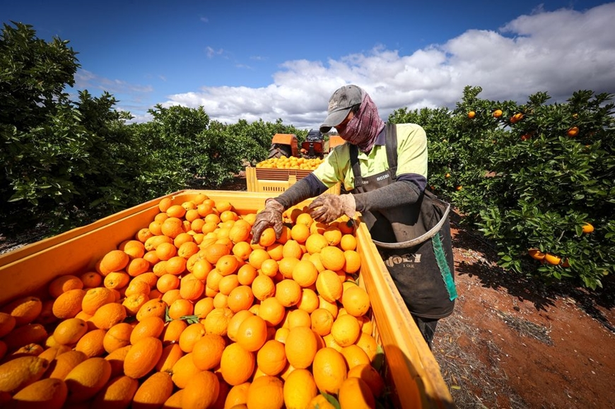 Làm nông nghiệp kiểu Australia - Ảnh 1.