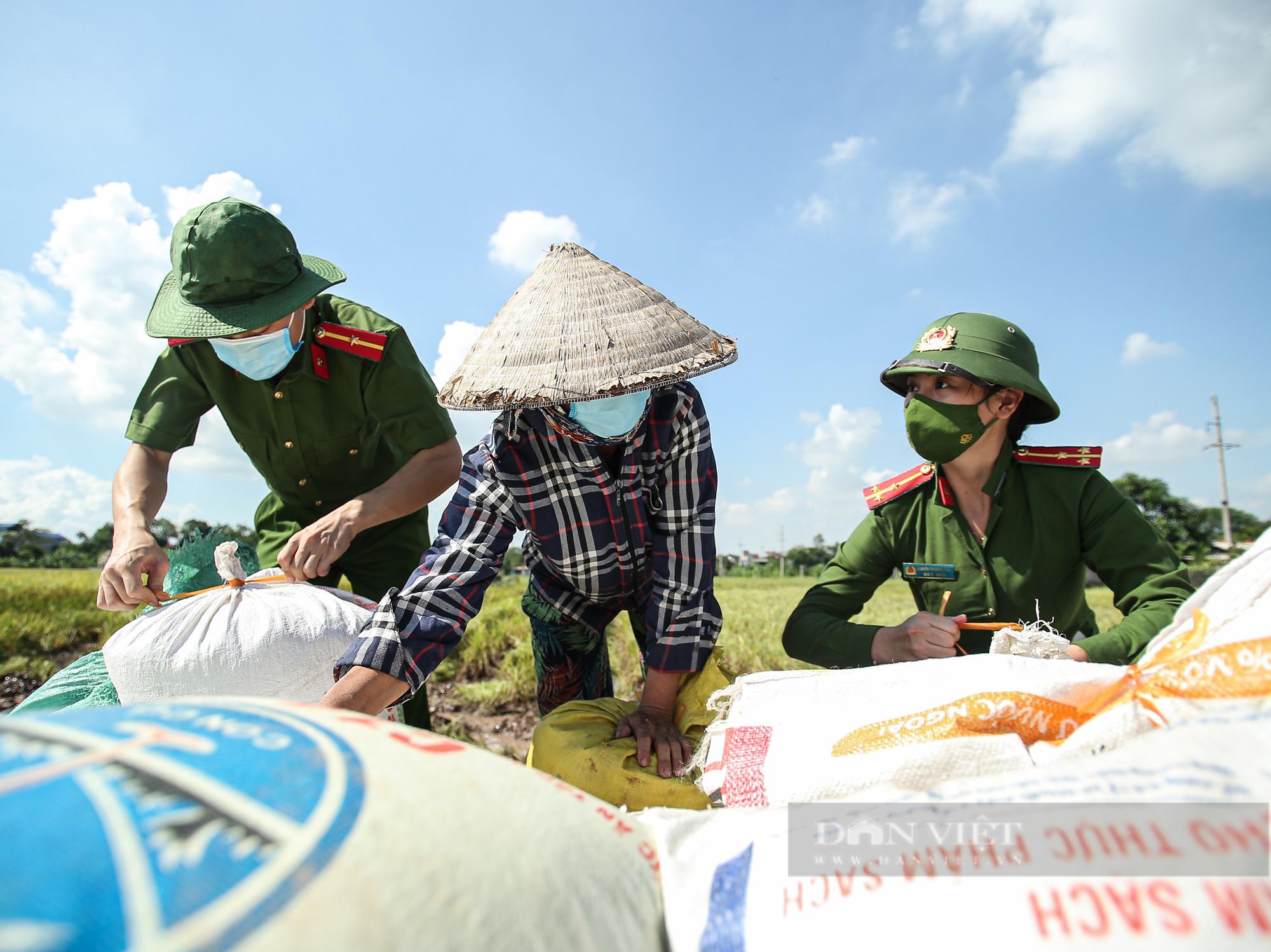 Hình ảnh chiến sĩ công an lội ruộng, ăn cơm vội để thu hoạch lúa giúp 141 hộ ở vùng cách ly y tế - Ảnh 2.