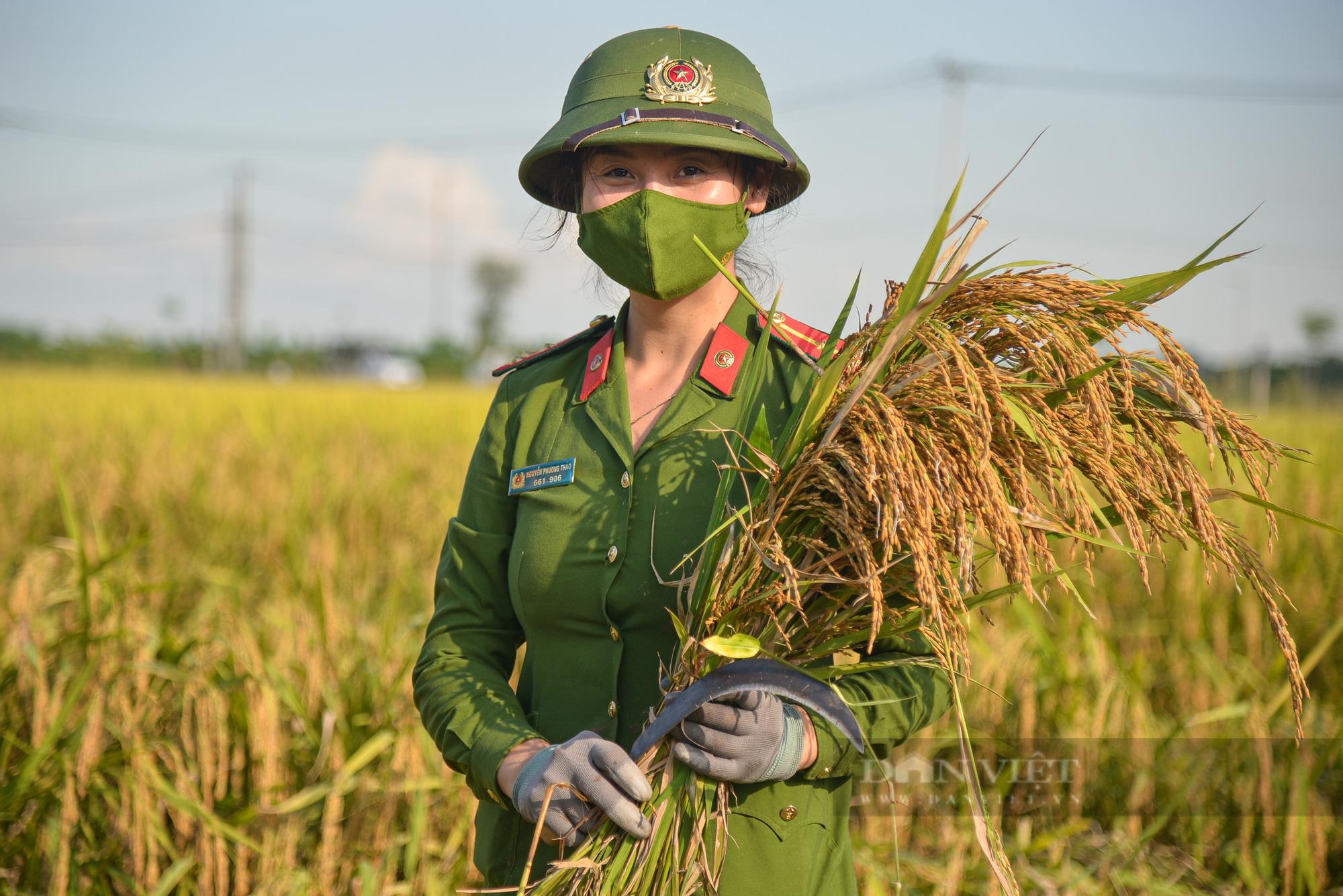 Hình ảnh chiến sĩ công an lội ruộng, ăn cơm vội để thu hoạch lúa giúp 141 hộ ở vùng cách ly y tế - Ảnh 3.